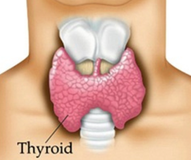 Hypothyroidism Homeopathy Treatment Homeopathy Doctor India